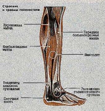 травмы большеберцовой кости Перелом большеберцовой кости - причины, симптомы.